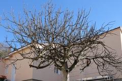 Maison ossature bois Ponteves (1)